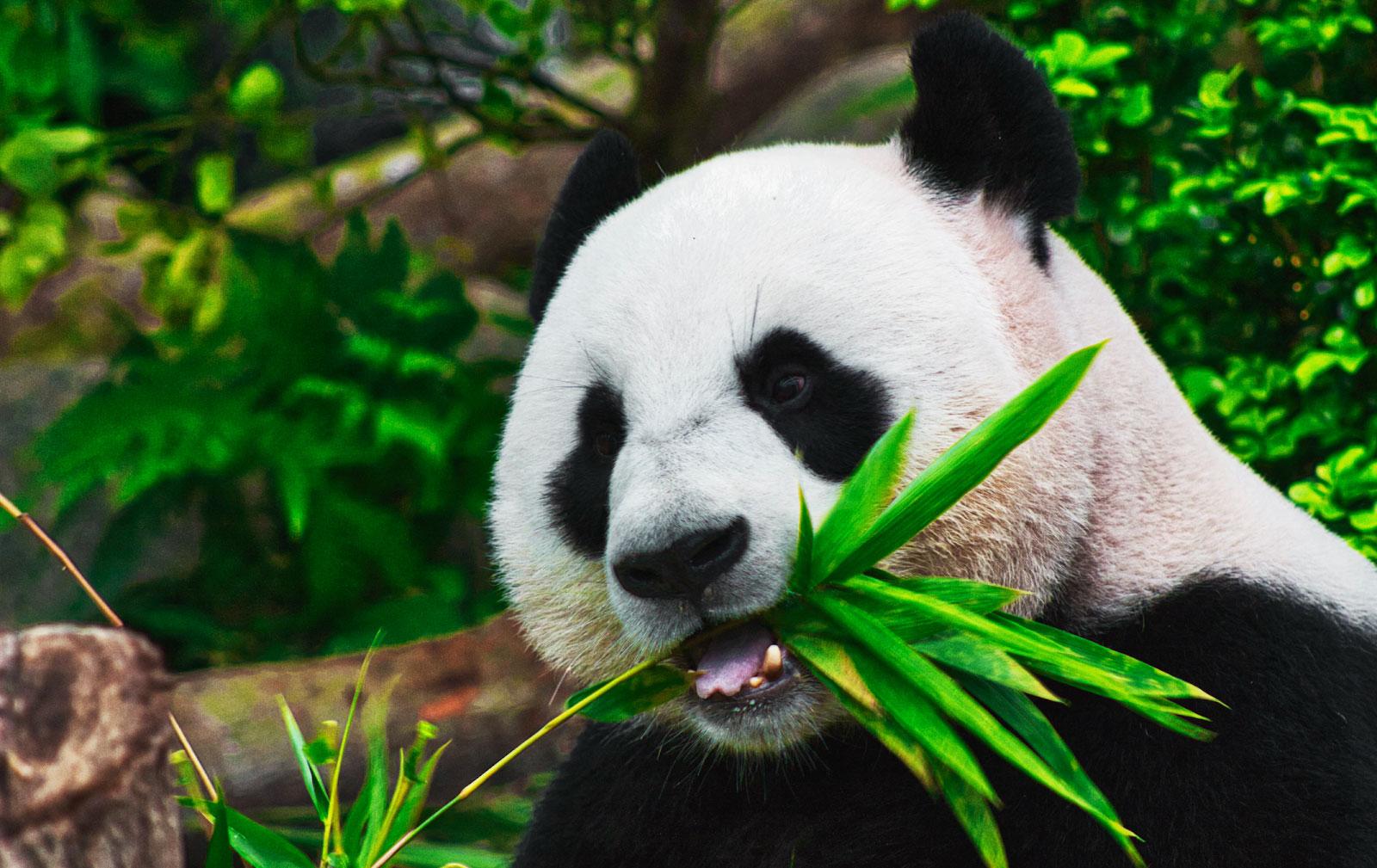 Pandas InfluxDB